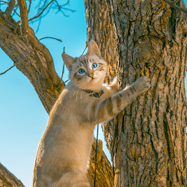 Going To The Top by Julie Wooden - Animals - Cats Kittens ( cat, kitten, north dakota, hebron, sam, sky, blue sky, tree, nature, autumn, sunny, outdoors, scenery, feline, animal, skyscape )