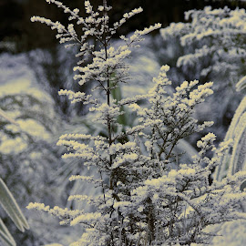 Hoar Frost by Alison Beare - Nature Up Close Natural Waterdrops (  )