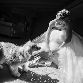 Lara by Mauro Locatelli - Wedding Bride ( bride, wedding, black and white, dog )
