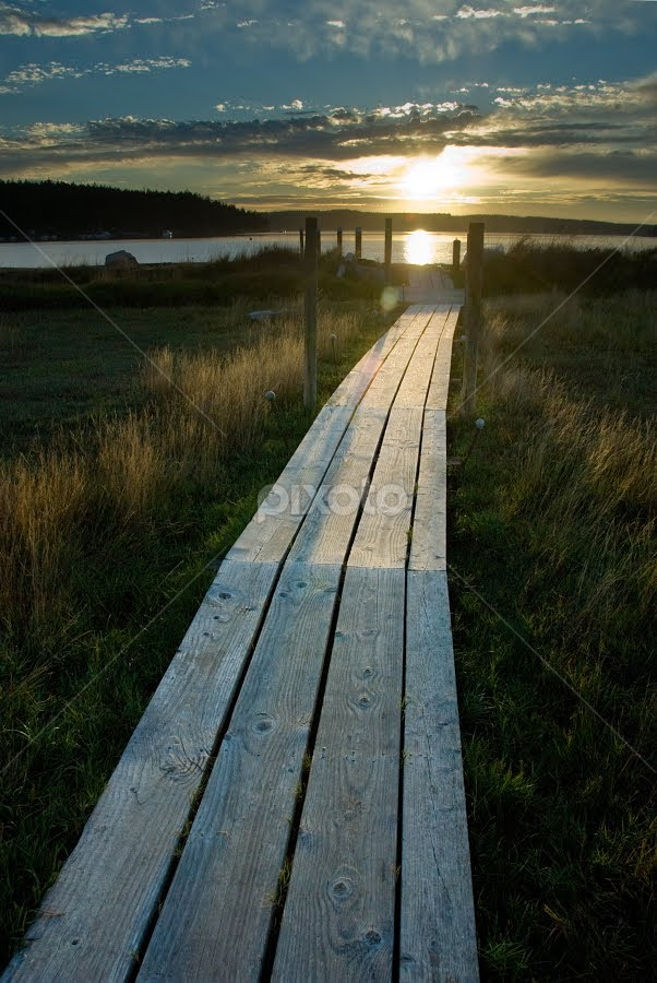 Decatur Island Boardwalk by Kirsten Morse - Landscapes Prairies, Meadows & Fields