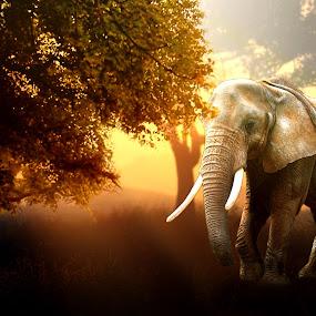Im Lonely by Dean Hakeem - Animals Other Mammals