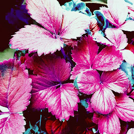 pink leaves by Amrita Singh - Nature Up Close Gardens & Produce ( colors, plants, pink, leaves, natural )