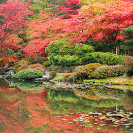 Autumn Revealed Diptych I by Briand Sanderson - City,  Street & Park  City Parks ( reflection, maples, japanese maples, japanese garden, autumn leaves, autumn, japanese gardens, still, seattle japanese garden, autumn colors, japanese, colours )
