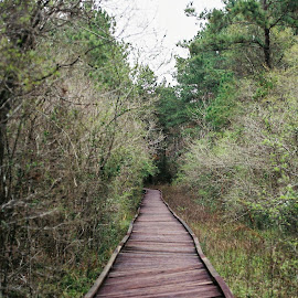 Crooked Path by Hannah DiBenedetto - Buildings & Architecture Bridges & Suspended Structures ( park, nature, path, trees, walkway )
