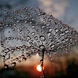 Prayer To Sun by Marija Jilek - Nature Up Close Natural Waterdrops