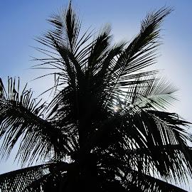 silhouette by Venkat Krish - Nature Up Close Trees & Bushes ( #nature, #sunny, #silhouette, #tree, #terrace )