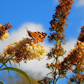 Butterfly 4 by Kristine Nicholas - Novices Only Flowers & Plants ( clouds, orange, macro, nature, bugs, butterflies, blue, green, nature up close, bug, flowers, insects, insect, flower,  )