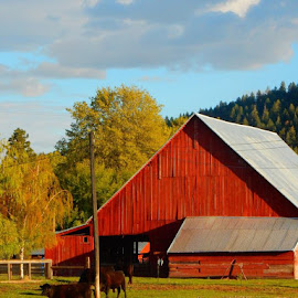 Country Living by Ilene Kalus - Buildings & Architecture Other Exteriors ( my favorite landscape, red barn, country living, country comfort, happy cows )