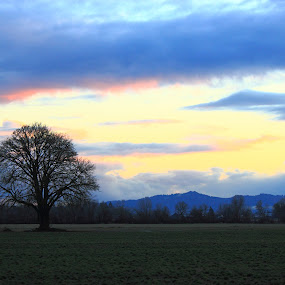 by Eric Hanson - Landscapes Prairies, Meadows & Fields ( tree sunset clouds oregon )
