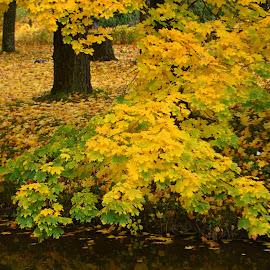 by Vida Jankaitiene - Nature Up Close Leaves & Grasses
