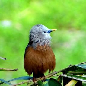 by Simanta Hazarika - Animals Birds