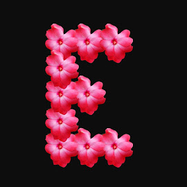letter E by Paul Wante - Typography Single Letters ( single, letter, illustration, typography, design )