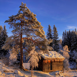 The Cabin by Rune Askeland - Buildings & Architecture Other Exteriors ( osterøy, cabin, wbpa, winter, snow, trees )