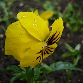 macro raindrops on flowers by Drago Ilisinovic - Novices Only Macro