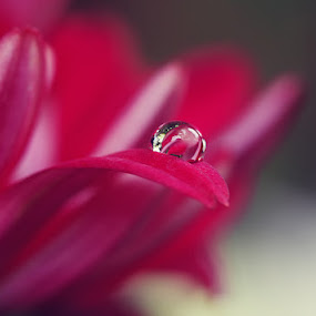 Love Story by Diens Silver - Nature Up Close Flowers - 2011-2013 ( macro, dew, waterdrops )
