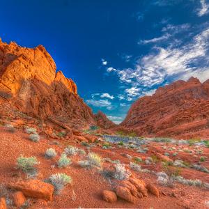 Desert Morning.jpg