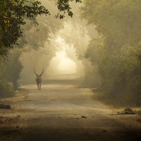 Early Morning at Bharatpur by Debajit Bose - Landscapes Travel ( places to see, meadows, forest, travel, places, landscape, nature, fog, foggy morning, bharatpur, antelope, landscape photography, travel photography )