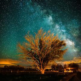 Milky Way Tree by Tyler Gudmundsen - Landscapes Starscapes