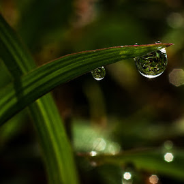 natural dew... by Kawan Santoso - Nature Up Close Natural Waterdrops