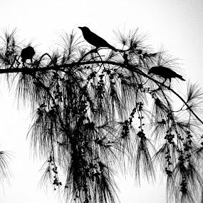 Family by Ravi Shankar Dutta - Animals Birds