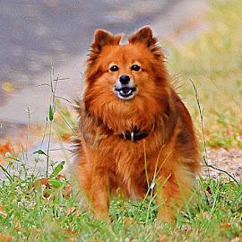 by Vino Param - Animals - Dogs Running (  )