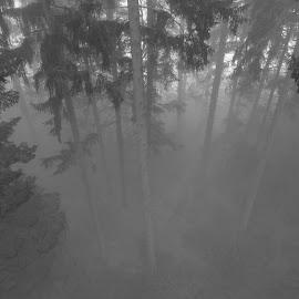 by Dušan Gajšek - Nature Up Close Trees & Bushes ( gozd, nem?ija, bavarski gozd, narava, potovanja )