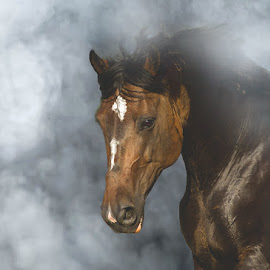dream by Zoltán Túri - Animals Horses