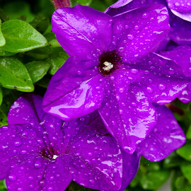by Martin Stepalavich - Flowers Flower Gardens