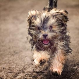 by Jimmy Kohar - Animals - Dogs Portraits