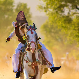 Concentration by Bakhtiar Ahmed - Sports & Fitness Other Sports ( horseback, natural light, saddle, horse, tentpegging, light, animal )