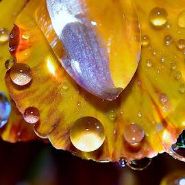 by Randy Young - Nature Up Close Natural Waterdrops