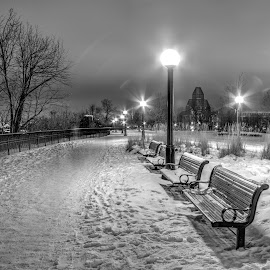 Public Park Benches by Marc Parent - City,  Street & Park  City Parks ( public park, lights, winter, benches, cold, black and white, snow, trees )