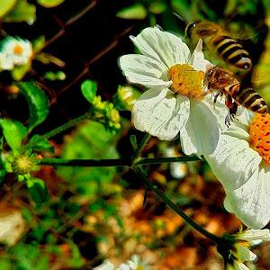 Jan 20 bees shot with phone.jpg
