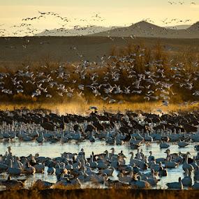 by Gorazd Golob - Landscapes Prairies, Meadows & Fields