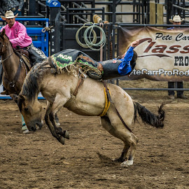 ECFAR by Daniel Dimitrov - Sports & Fitness Rodeo/Bull Riding ( event, horse, action, rodeo, people )