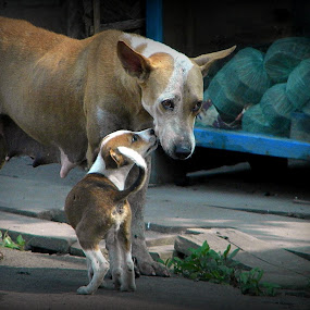 MOTHER & CHILD............ by Arunabha Kundu - Novices Only Pets ( pratiki, soham, arijit, arnab, dipankar )