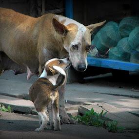 MOTHER & CHILD............ by Arunabha Kundu - Novices Only Pets ( pratiki, soham, arijit, arnab, dipankar )