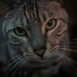 by Rob Ebersole - Animals - Cats Portraits