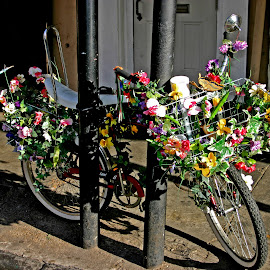 Flowery Bike by David Walters - City,  Street & Park  Historic Districts ( new orleans, lumix fz200, street, artistic, bicycle )