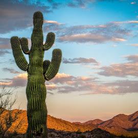 by Ken Mickel - Landscapes Deserts ( clouds, desert, landscape, goodyear arizona, photography, sky, topaz adjust, landscape/desert, nature, topaz, sunset, sunsets, arizona, outdoors, estrellla )
