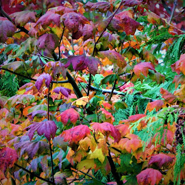 Fall in Colors  by Lavonne Ripley - Nature Up Close Leaves & Grasses