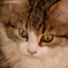 kitty by Lize Hill - Animals - Cats Kittens