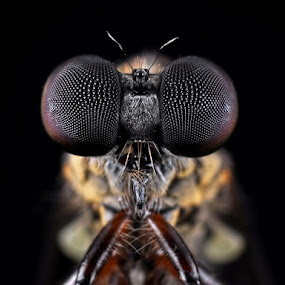 by Donald Jusa - Animals Insects & Spiders ( animals, macro, micro, bugs, insects )