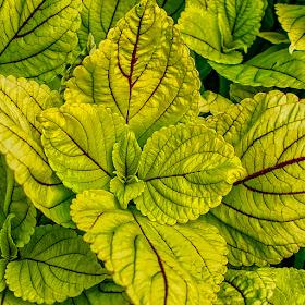 disney leaves.jpg