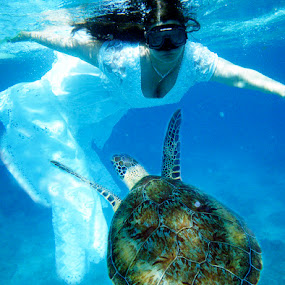 Sea Turtle Trash the Dress by Danniel McKnight - Wedding Bride