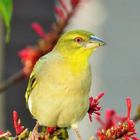 animals on plants by Geraldine Angove - Animals Birds (  )