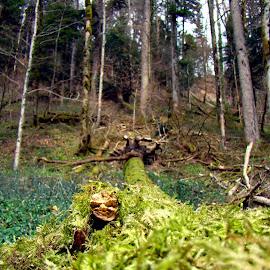 rising again by Dori Ta - Nature Up Close Trees & Bushes (  )