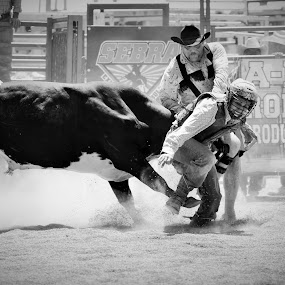 Saving Cowboys Is My Passion  by Brian  Shoemaker  - Sports & Fitness Rodeo/Bull Riding ( cowboy, life, bullfighter, black and white, cowboys, american, rodeo, living )