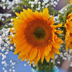 Sunflowers in vase by Terry Linton - Flowers Flower Arangements (  )