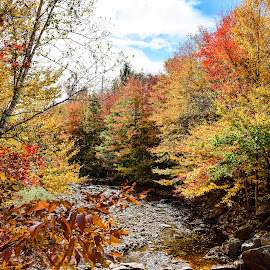 by Mark Wirzburger - Landscapes Forests ( ham branch, franconia nh, fall colors )